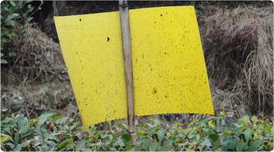 piège biologique statique à insectes