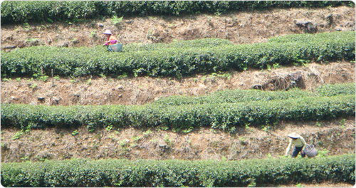 terrasse thé blanc en avril
