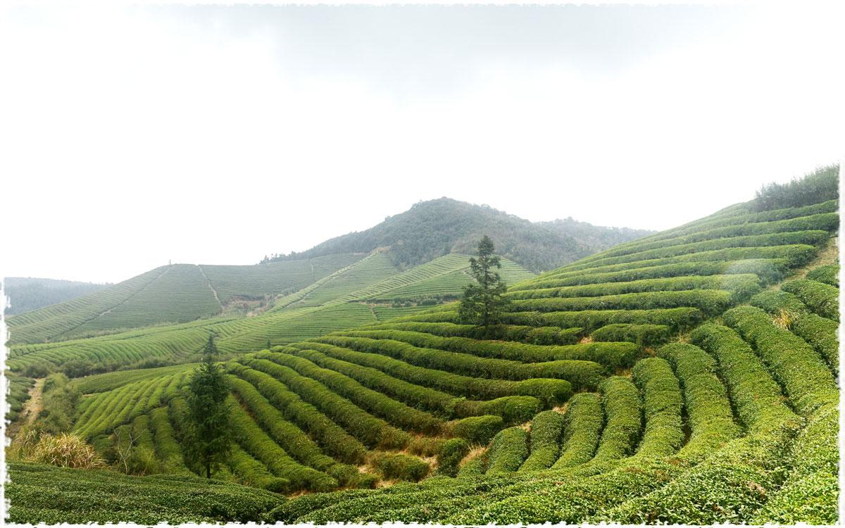 Jardins de Long Jing