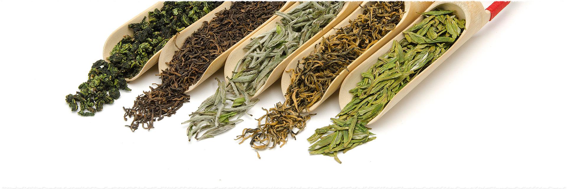 Thé vert, thé noir, quels  thés choisir quand on est débutant ?