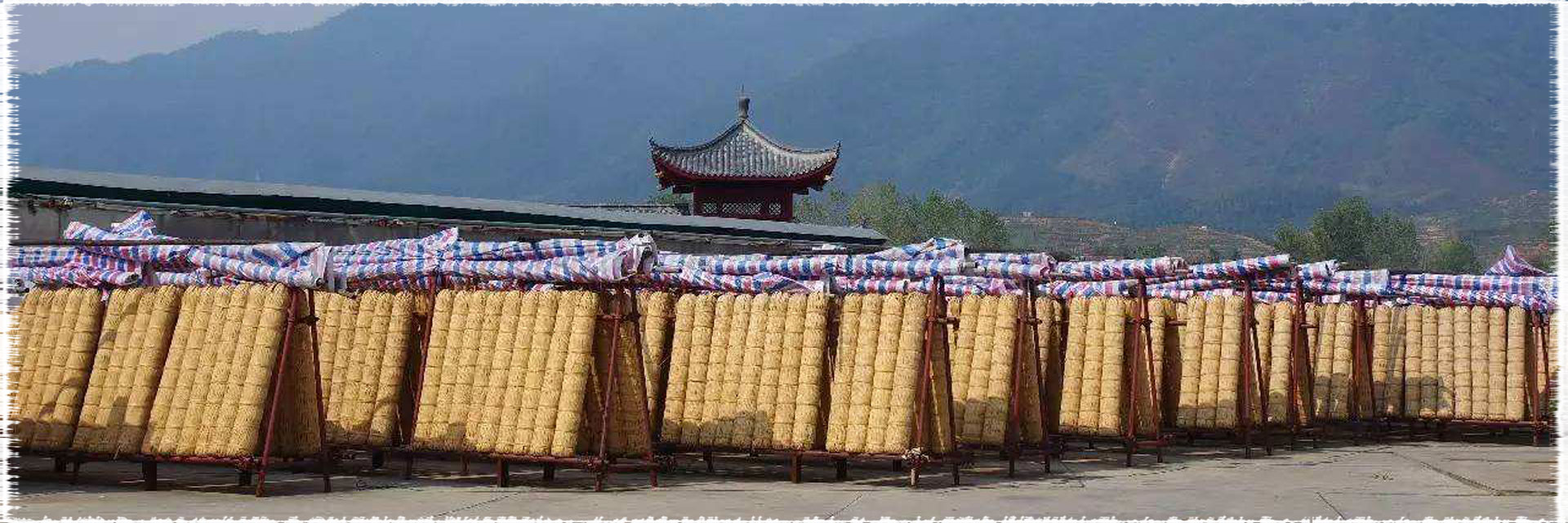 Le thé QianLiang