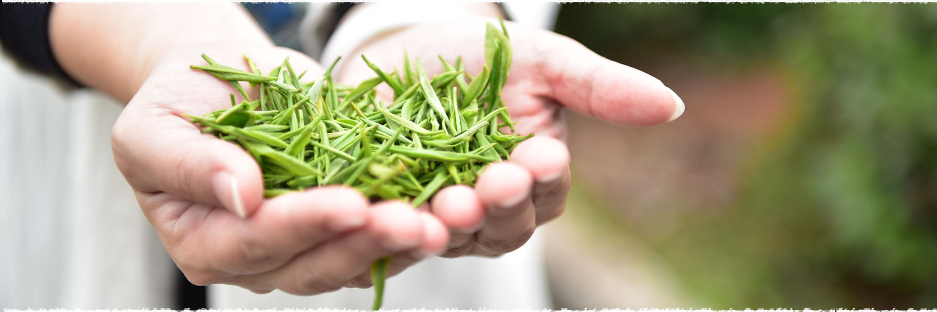 Les thés verts de printemps 2017.